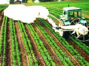 Instalación automatica de manta térmica sobre cultivo en campo abierto