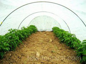 Túnel para cultivo forzado de hortalizas forrado con manta térmica