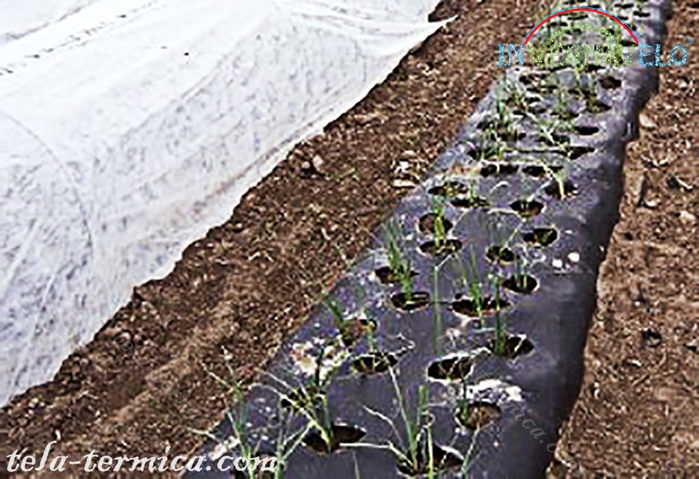 manta anti-heladas y ground cover sobre cultivos en campo.