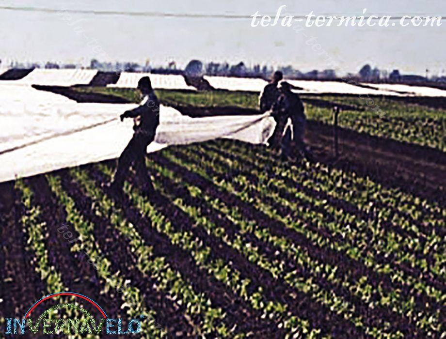 instalación de la manta anti-heladas en campo utilizada para la protección de cultivos.