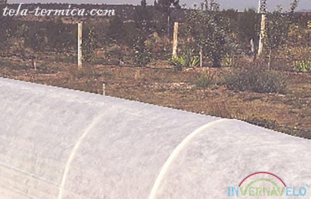 los micro túneles de invernavelo instalados en campo de cultivos para la protección de los climas extremos.
