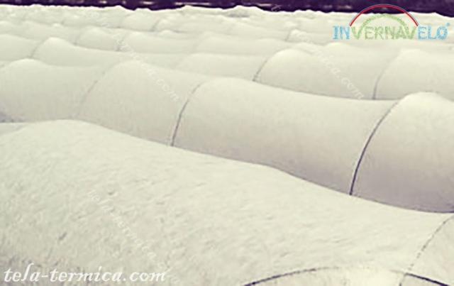 los micro túneles de Invernavelo instalados en campo de cultivos para protección contra las heladas.