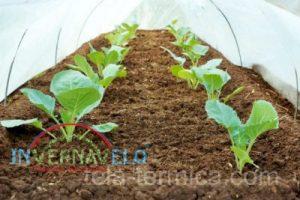 Protección de manta térmica en hortalizas