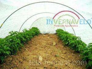 malla térmica en hortalizas